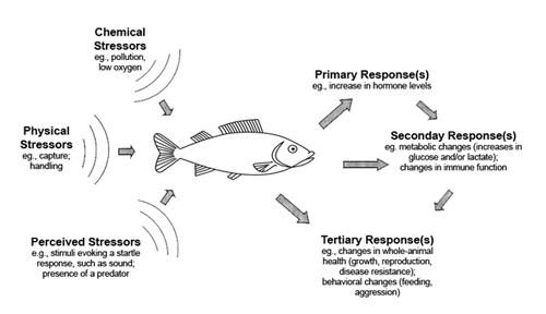 Fish stress 2